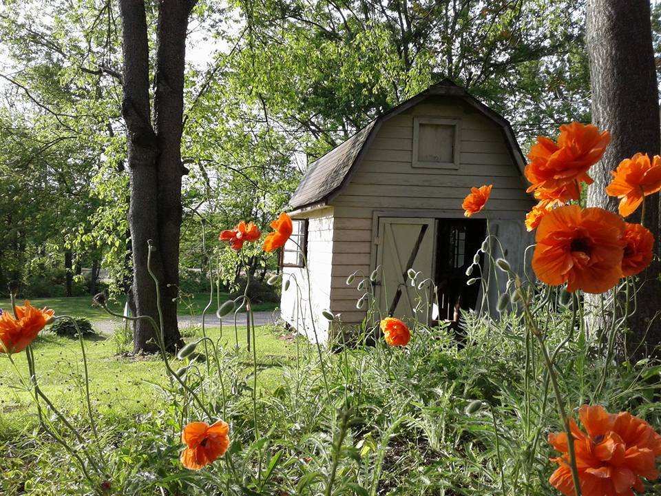 snack shack poppies bloom